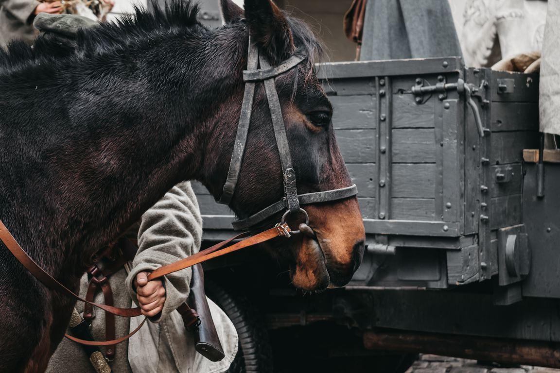 船橋競馬 無料 予想 買い目(馬単・馬複)南関、地方競馬
