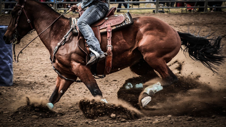 【アメリカJCC2021】出走予定馬・データ分析