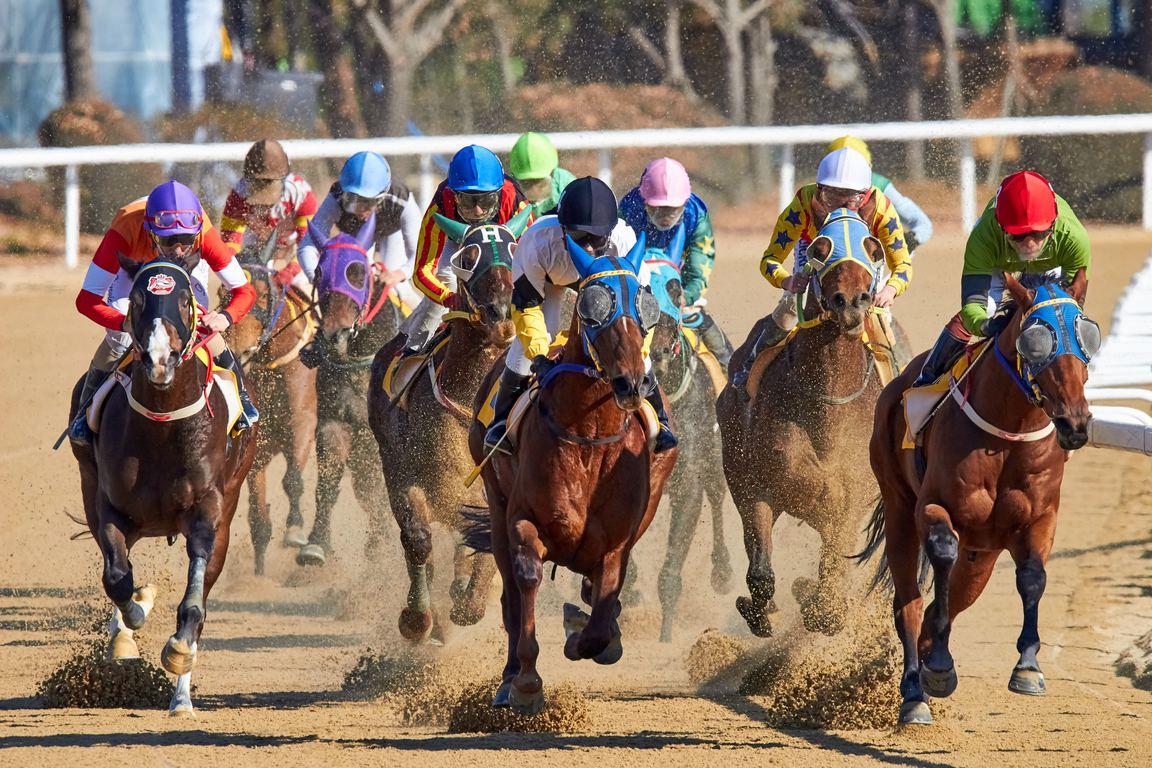 レパードステークス2020出走予定馬や登録馬・予想オッズ・注目馬評価