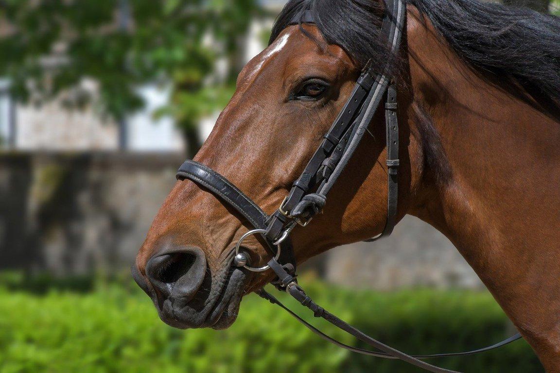 2/3大井競馬の軸馬予想ブログ