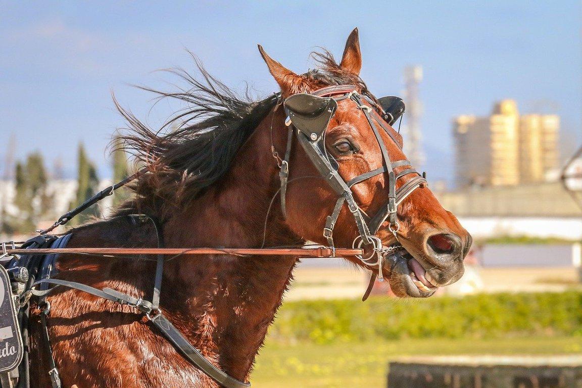 【ラジオNIKKEI賞2020予想】残念ダービー賞~素質馬揃った面白いレース